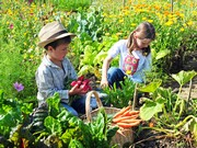 Jardinons sans pesticides pour un avenir durable