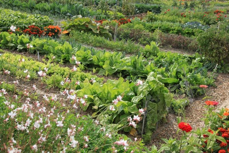 Minisite jardins au potager parc naturel r gional for Potager naturel sans entretien