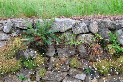 Minisite jardins diversifier son jardin parc naturel for Petit muret de jardin